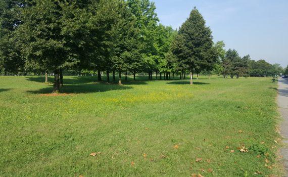 Parco della Pellerina a Torino
